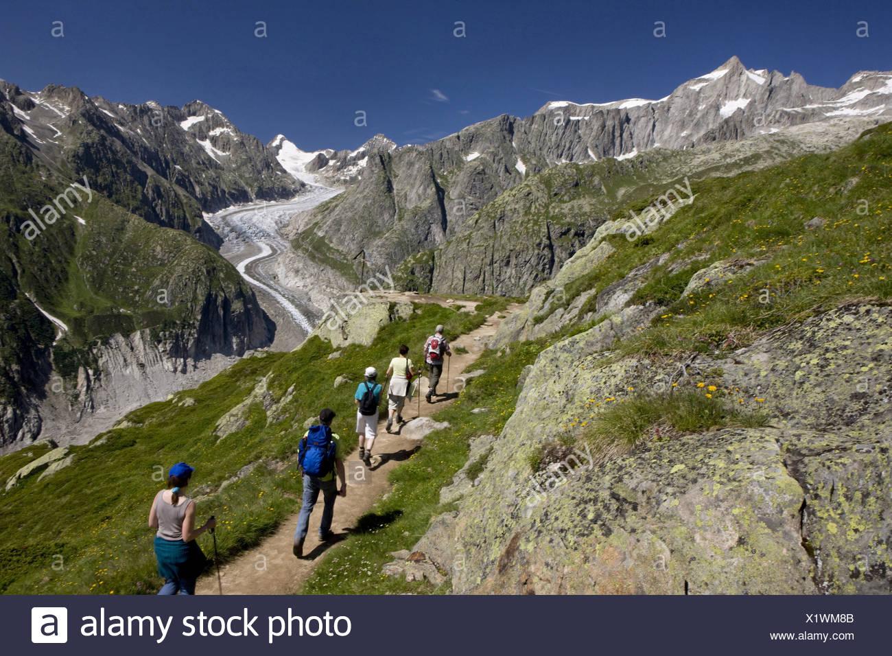Switzerland swiss walk hike group five persons footpath scenery nature Fieschergletscher Alpine roses mountains canton Valais - Stock Image