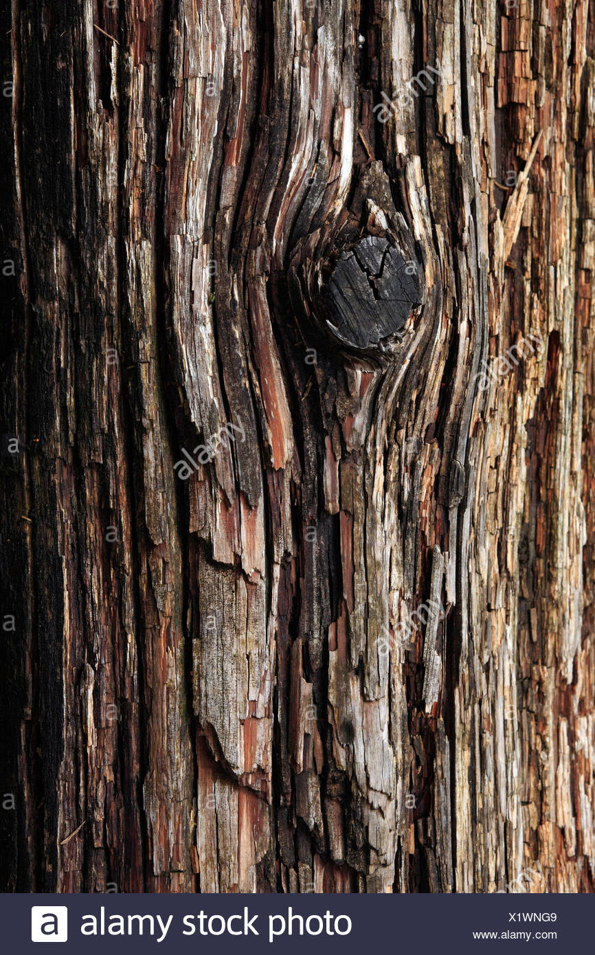 Schwangau, Germany, bark of a tree trunk - Stock Image