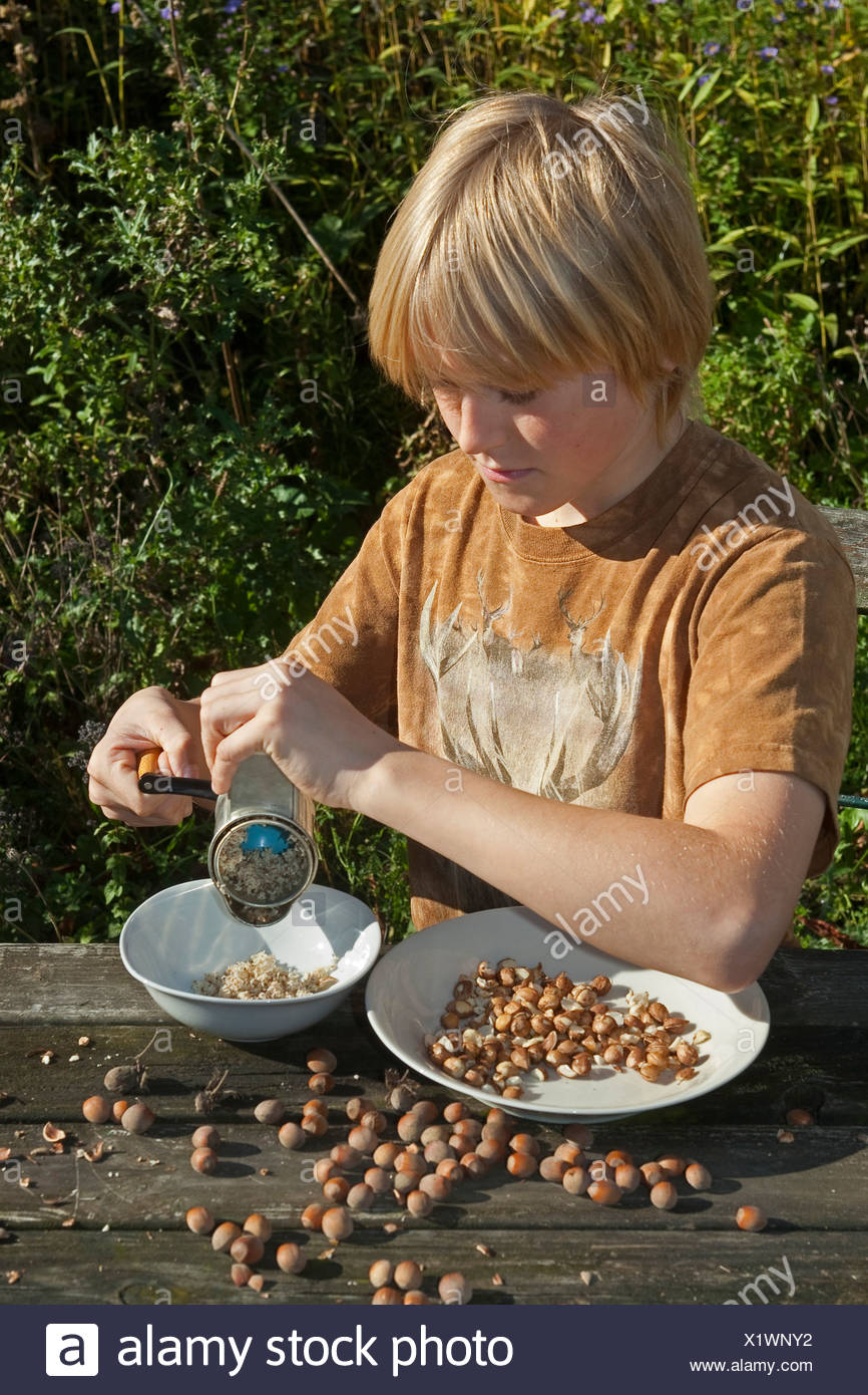 Common hazel (Corylus avellana), boy sitting at the garden table milling self-collected hazelnuts with a hand mill for making his own chocolate spread, Germany - Stock Image