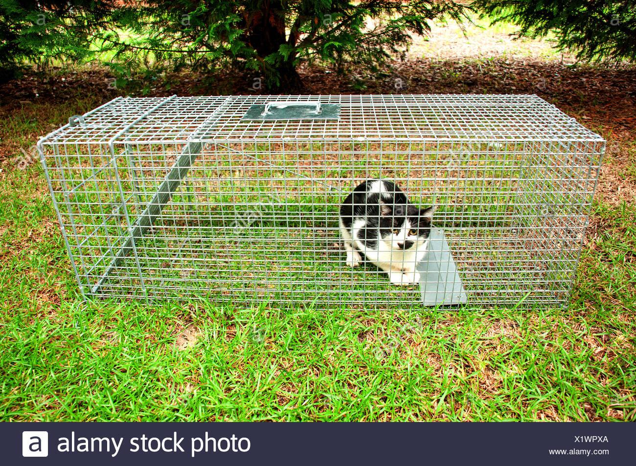 Humane Animal Trap - Stock Image