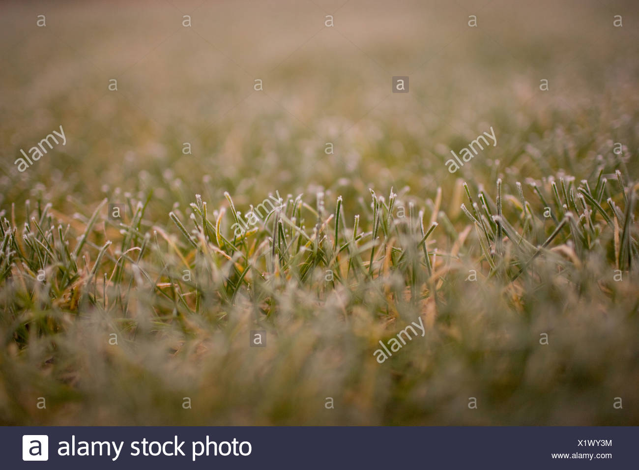 Frost on glass, close up - Stock Image