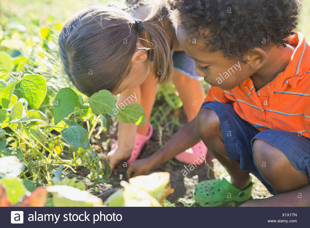 Children gardening together - Stock Image