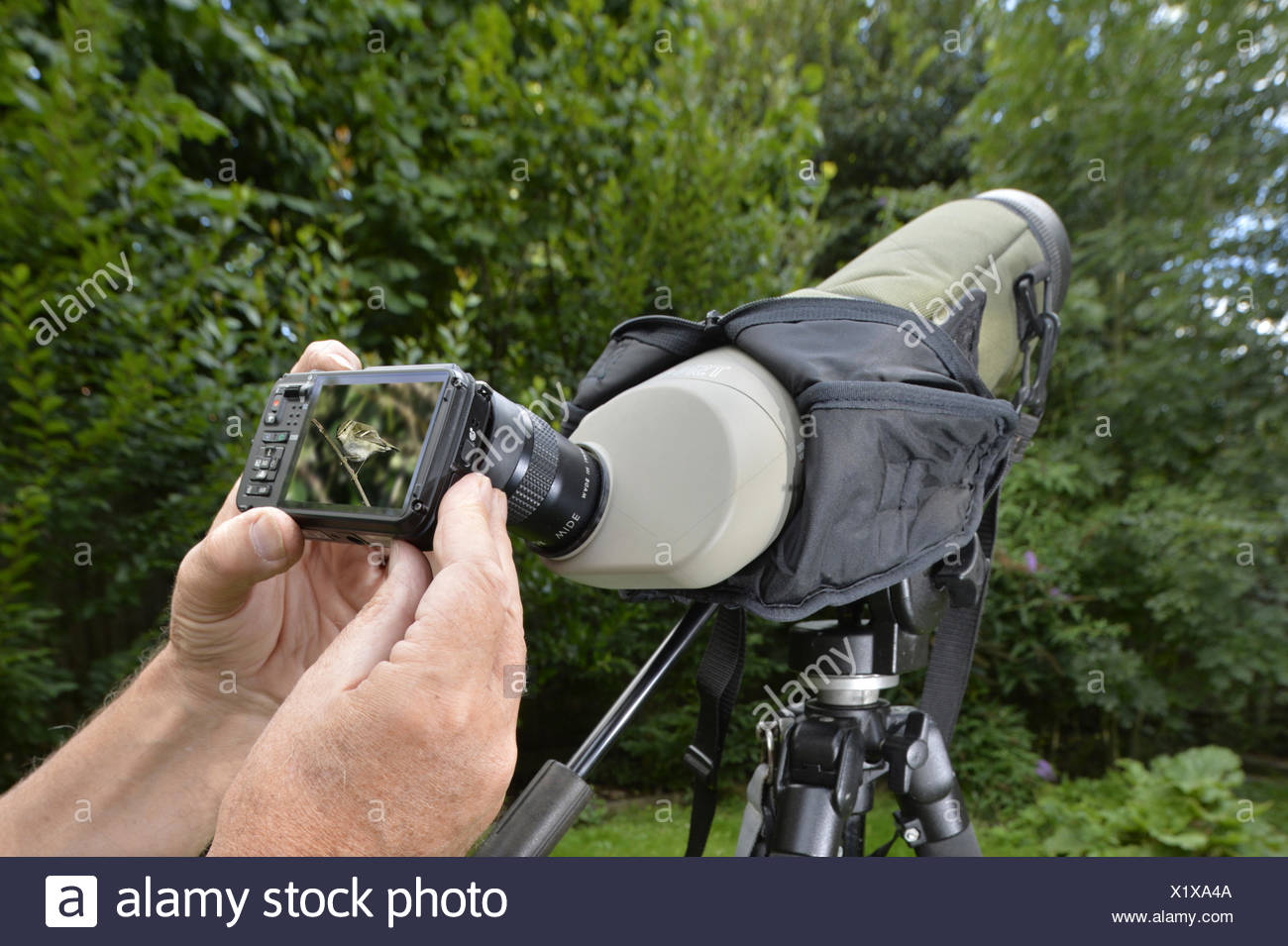 Digiscoping - taking a digital picture through a birder's scope - Stock Image
