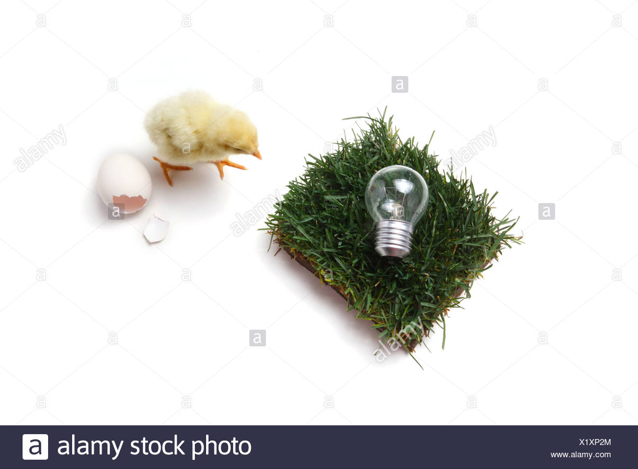 Fellow chick standing by broken eggshell,lawn and bulb - Stock Image