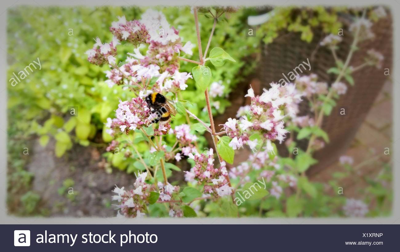 Flowers By Post Stock Photos Flowers By Post Stock Images Alamy