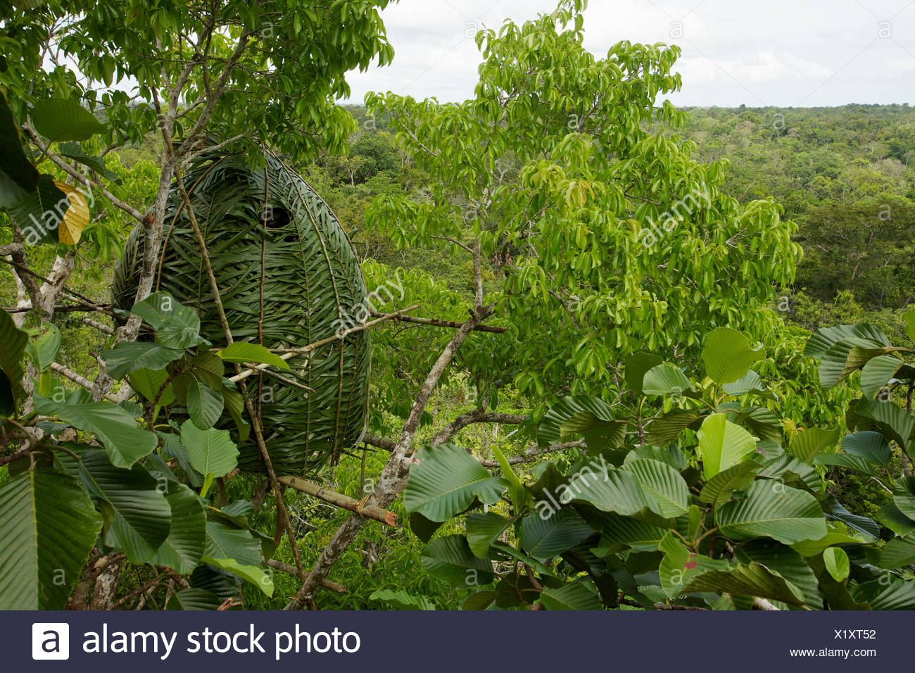 A leaf-cam inside a canopy blind. - Stock Image