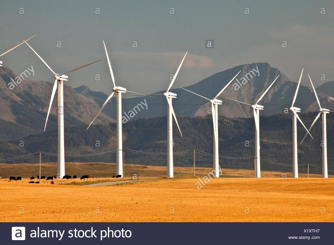 Power-generating windmills near Pincher Creek, Alberta, Canada. - Stock Image