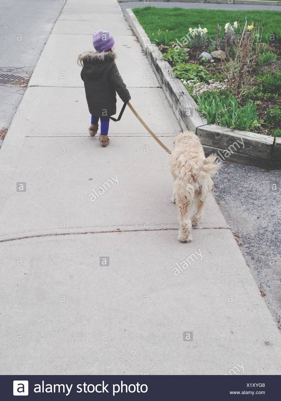 Rear View Of Girl Walking With Dog At Park - Stock Image