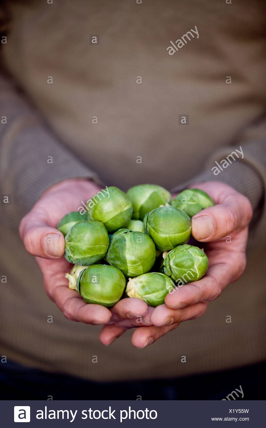 A man holding a handful of brussels sprouts - Stock Image