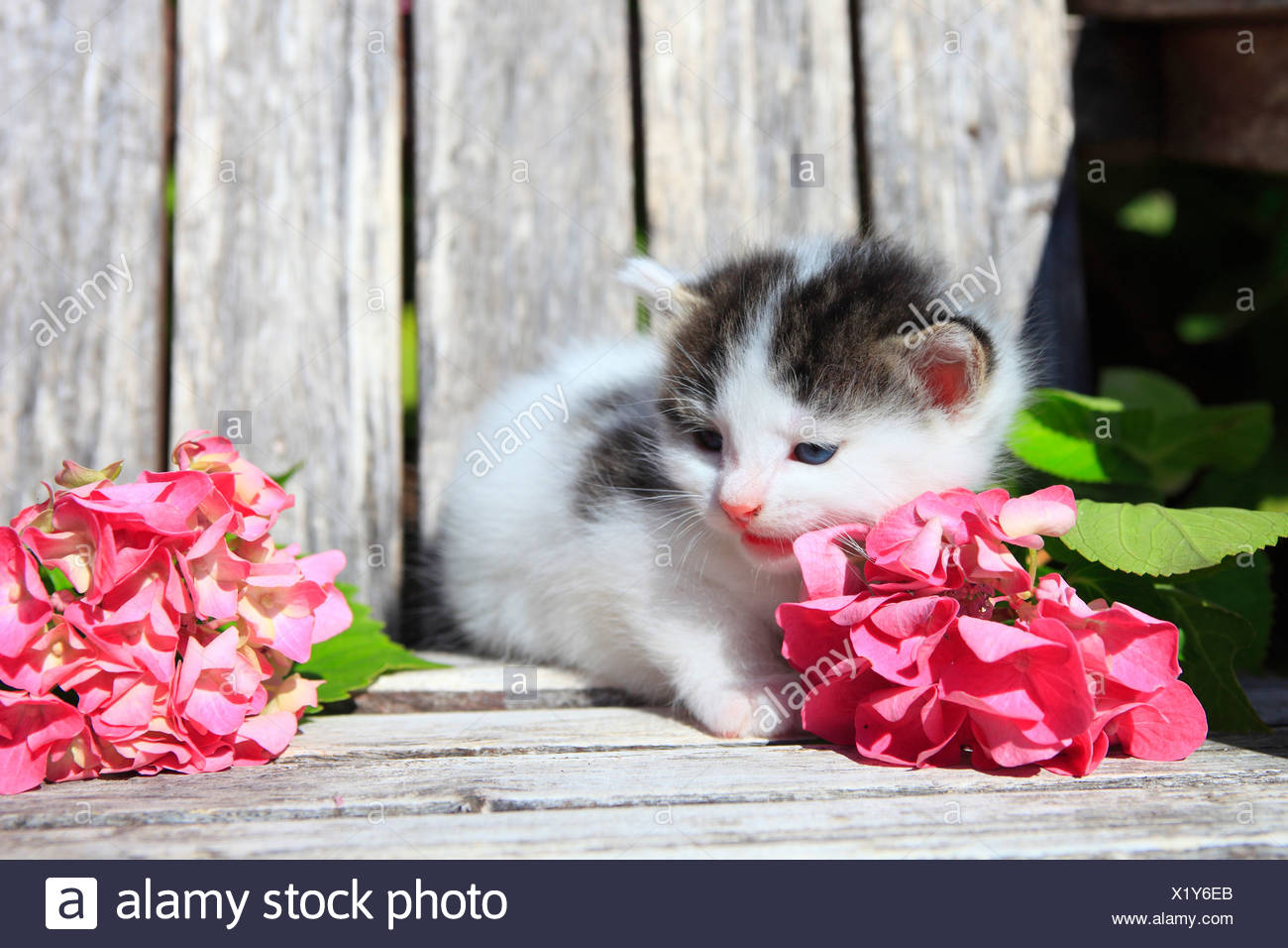 3 weeks, flower, flowers, garden, house, home, Animal, domestic animal, pet, young, cat, kitten, outdoors, outside, one, touched - Stock Image
