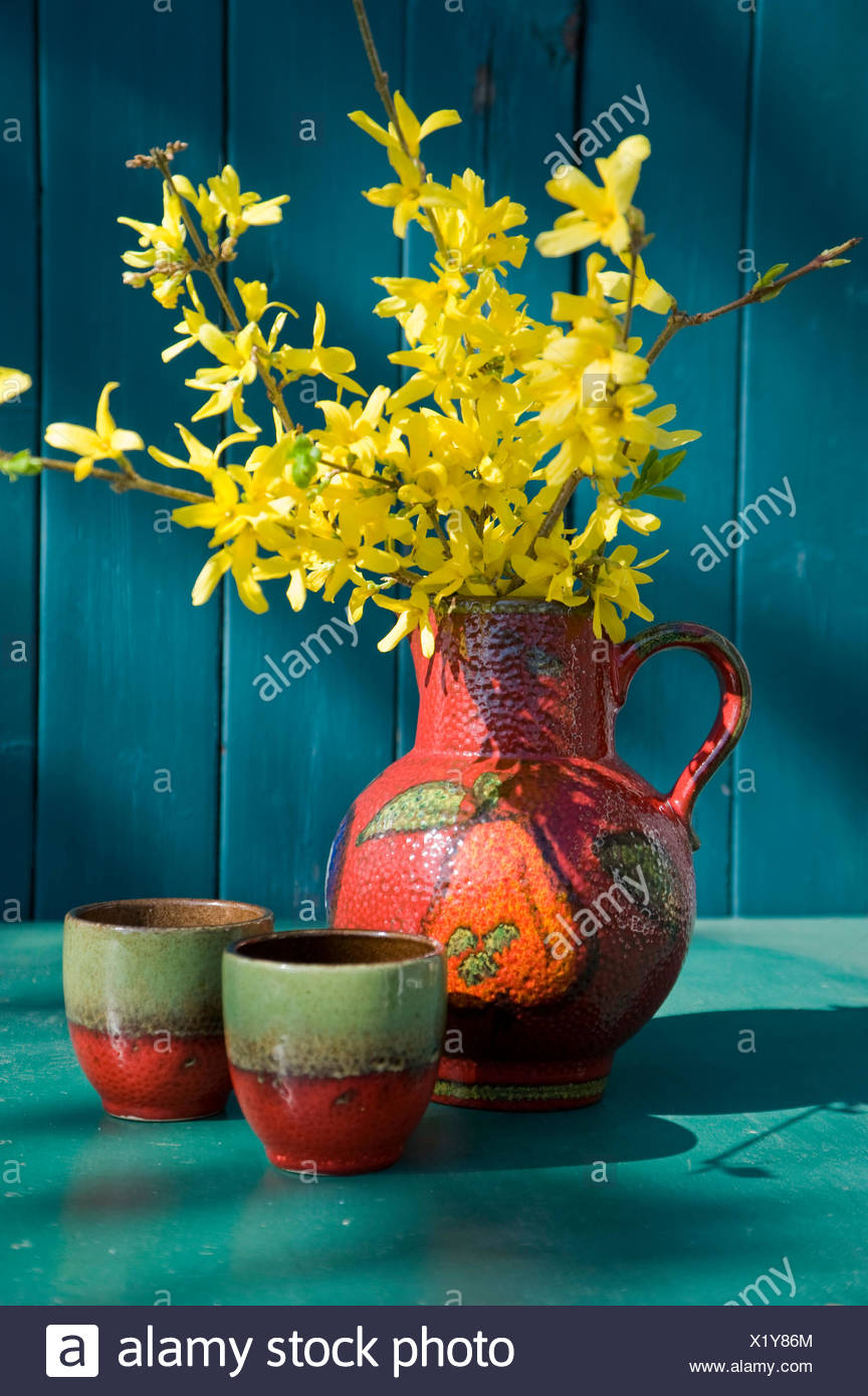 Old Seventies jar with blossoming twigs of Forsythia - Stock Image