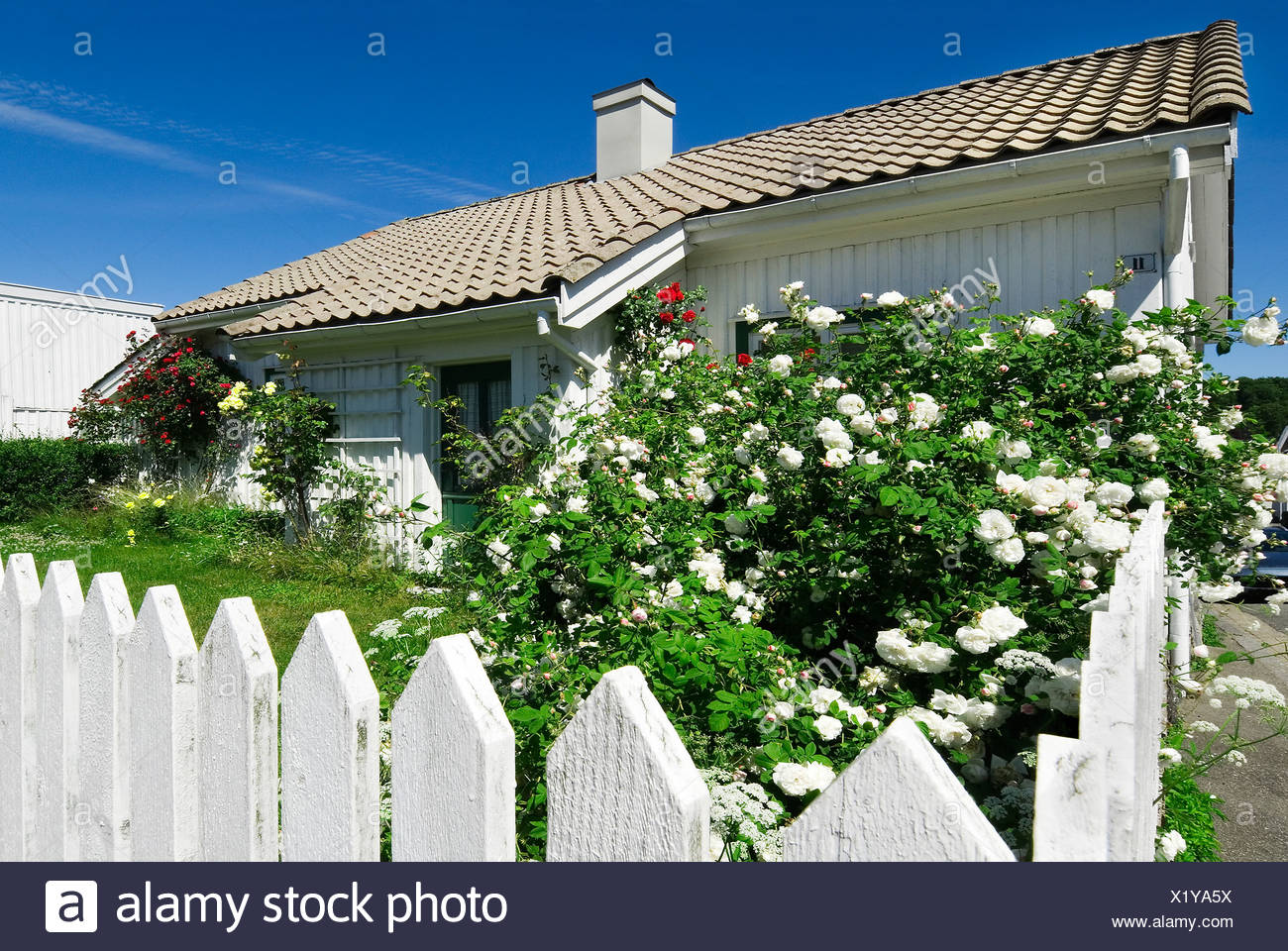 Country house against blue sky with lawn flowers and fence in foreground - Stock Image