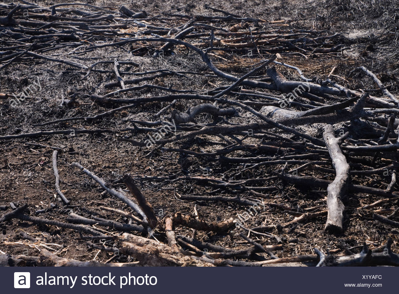 Charred branches on the ground - Stock Image