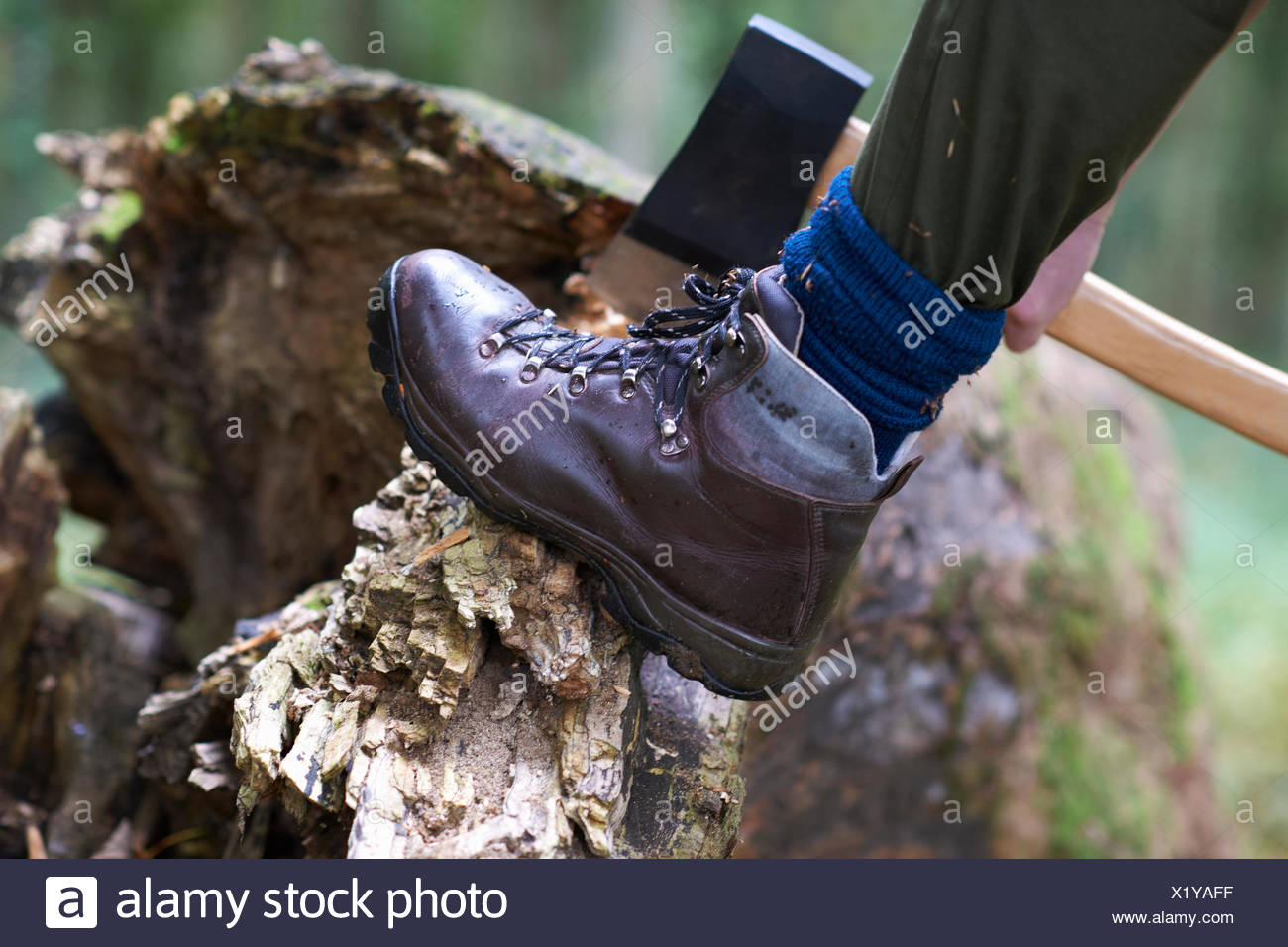 Cropped view of lumberjack's foot raised on tree stump Stock Photo