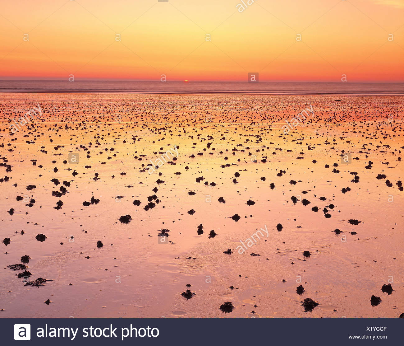 Channel Islands. Guernsey. Worm turnings on beach at sunset. - Stock Image