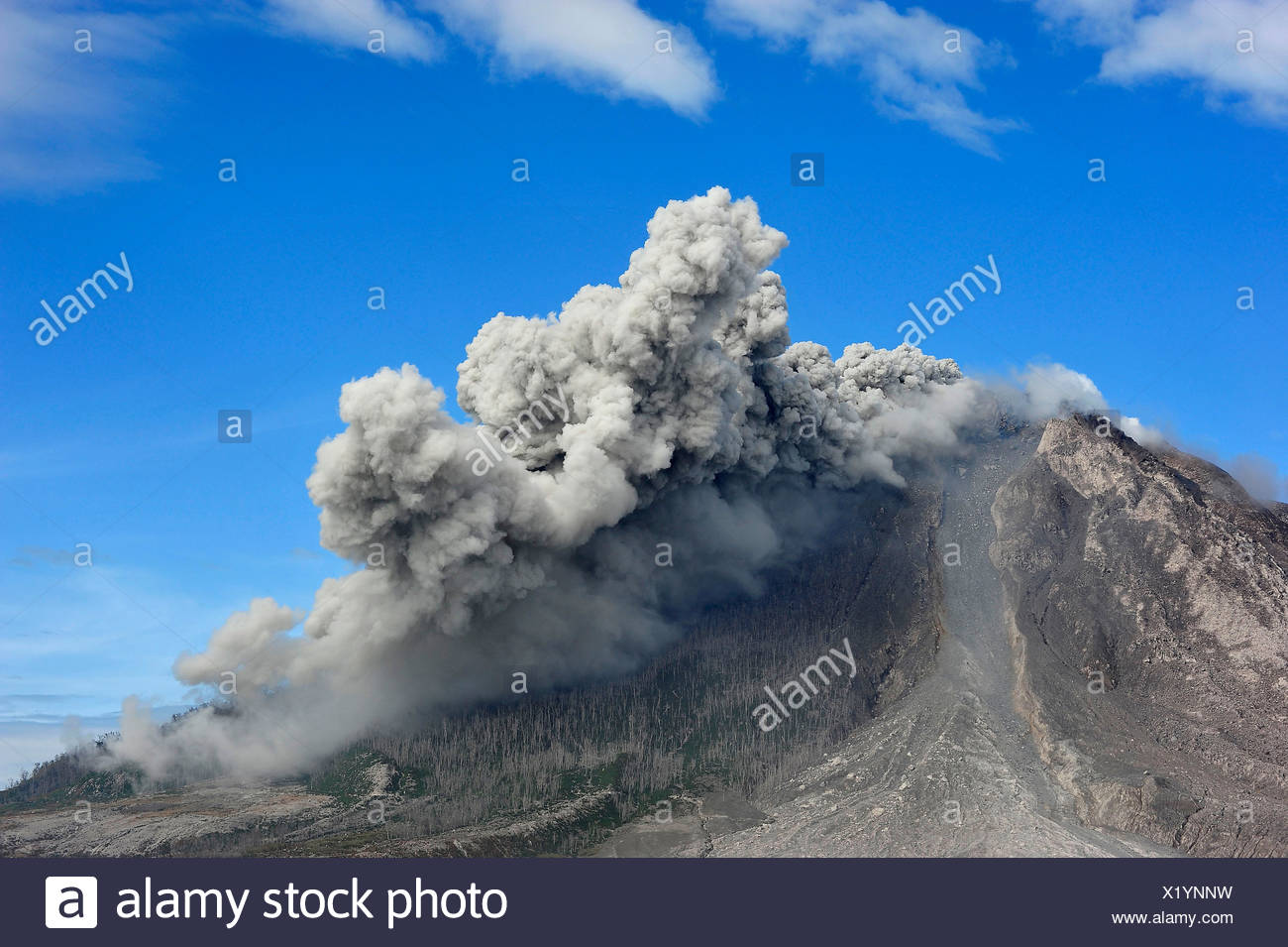 Volcano eruption with a pyroclastic cloud in the Mt. Sinabung. the slopes of the mountain with burnt trees - Stock Image
