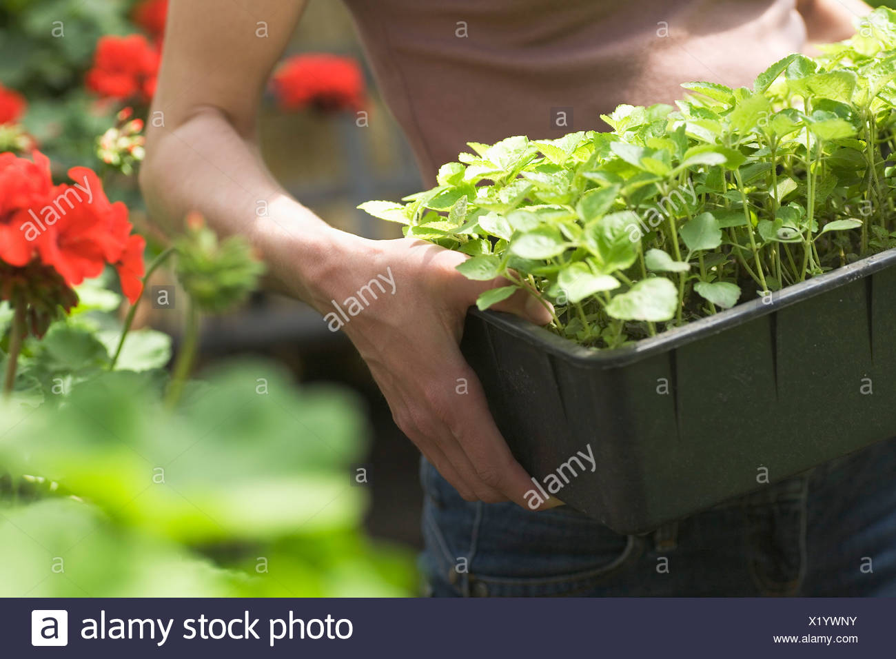 detail of young woman carrying flower box - Stock Image