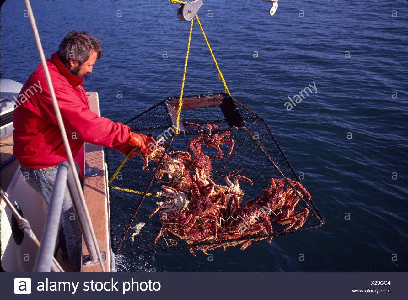 King Crab Fishing Alaska High ...