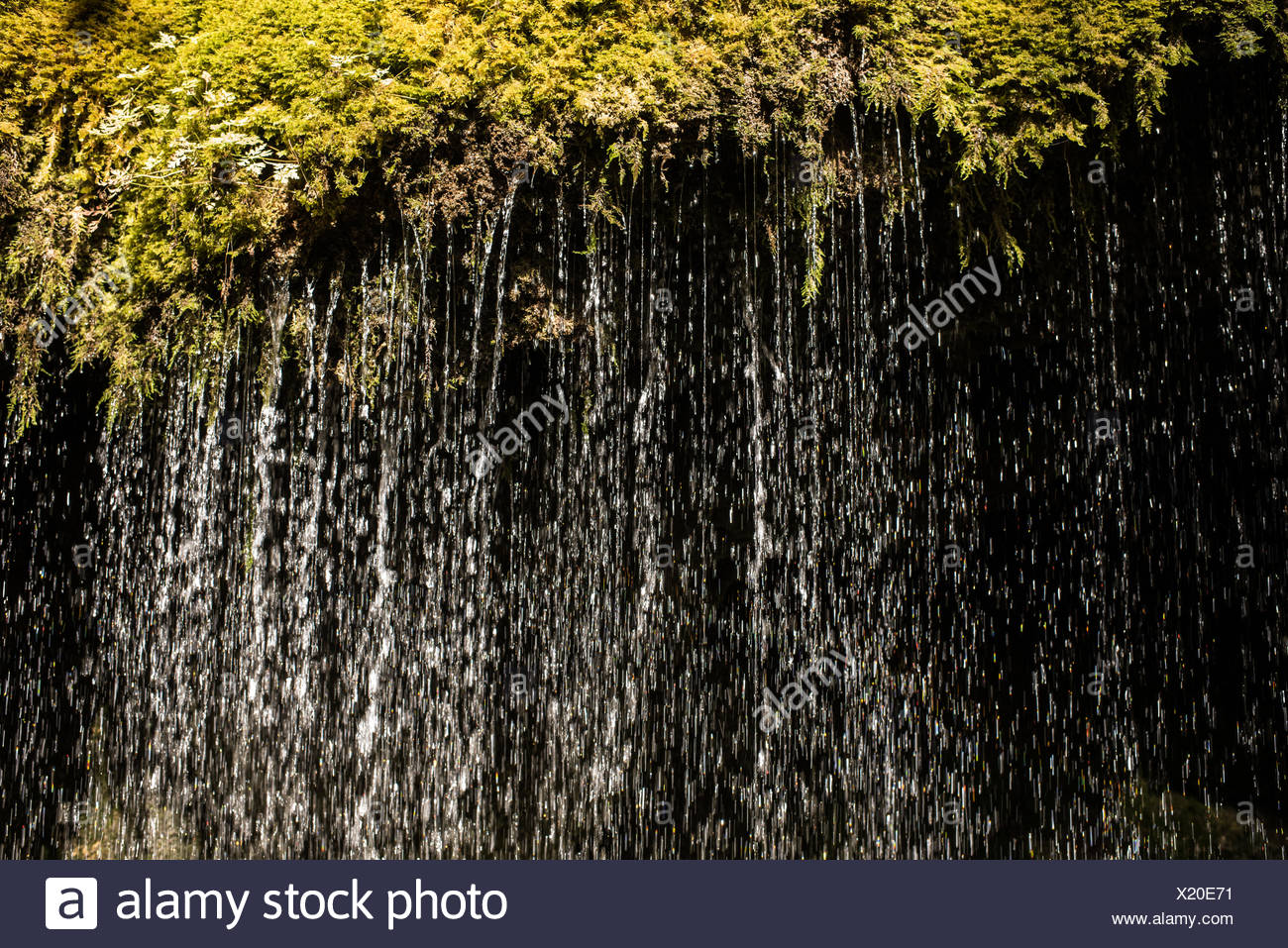 Lenzkirch, Germany, water runs down to shrubs - Stock Image