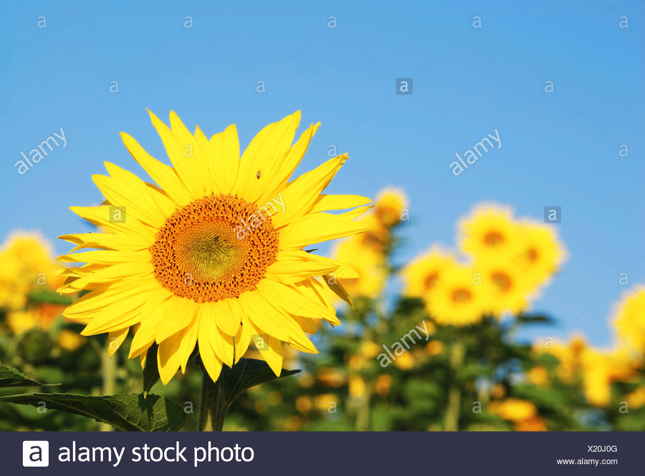 summer summerly flower - Stock Image
