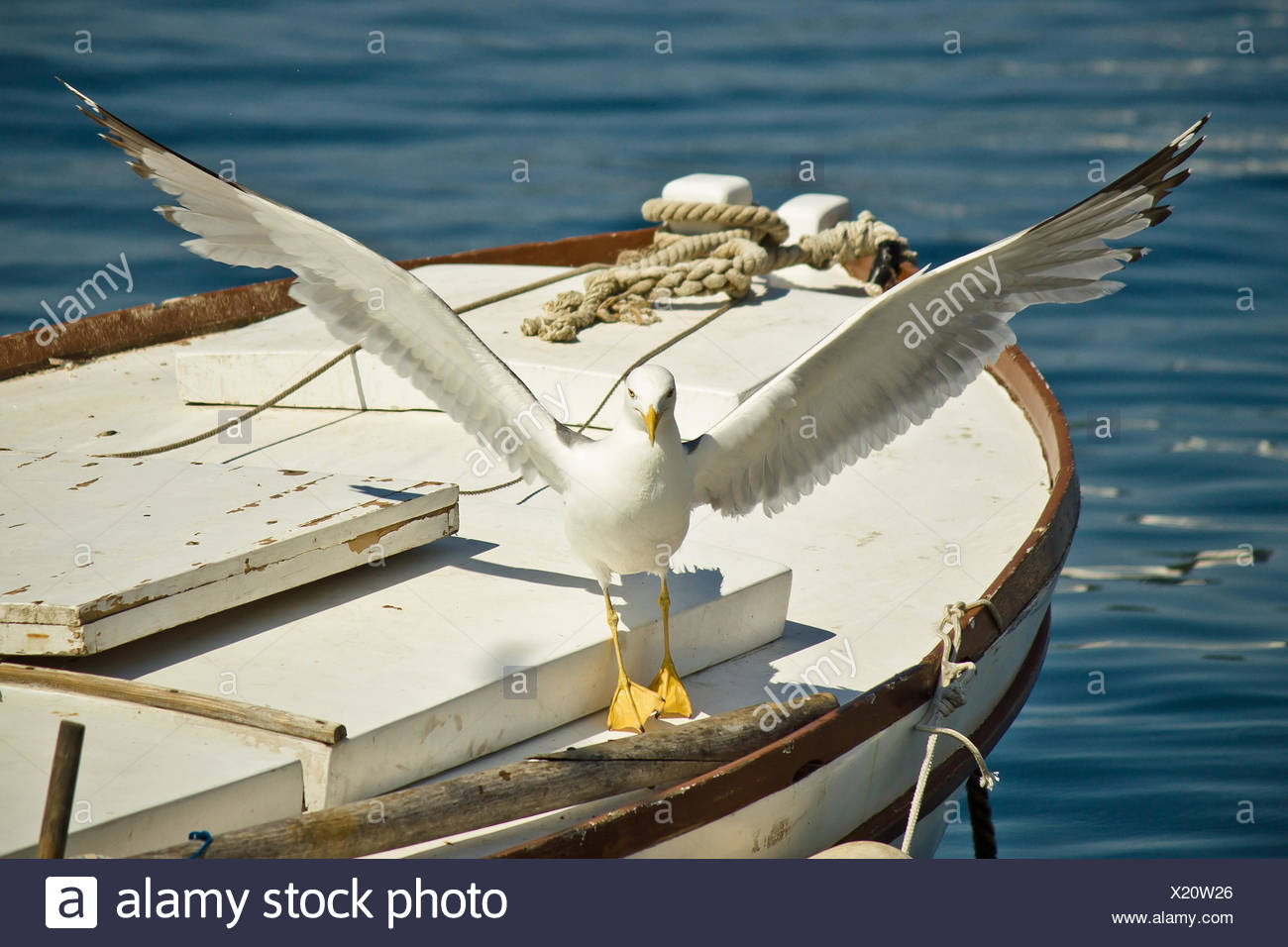 seagull flown away from boat - Stock Image