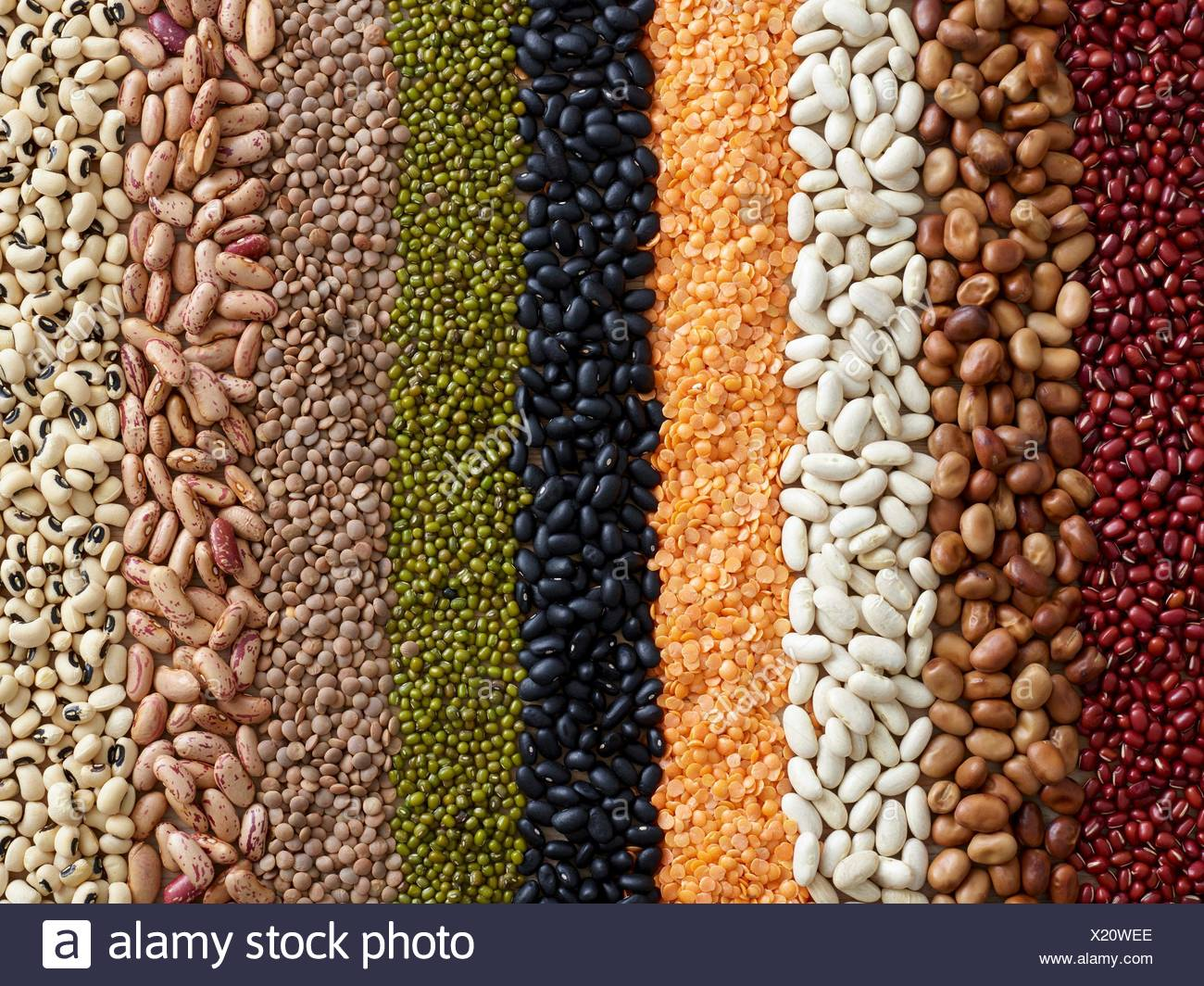 Pulses in rows. - Stock Image