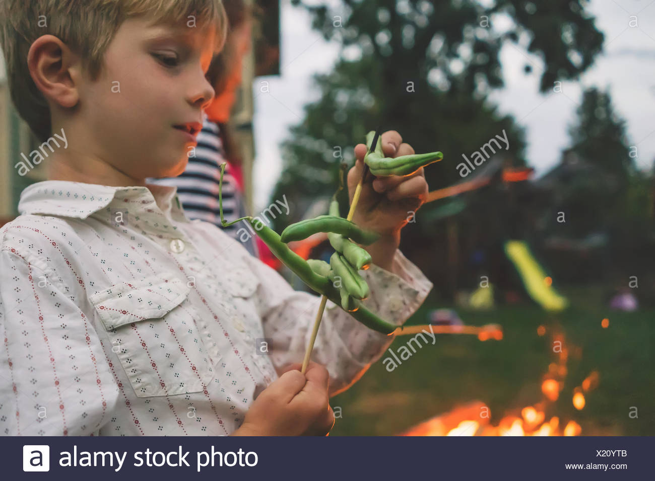 Young boy roasting green beans over camp fire - Stock Image