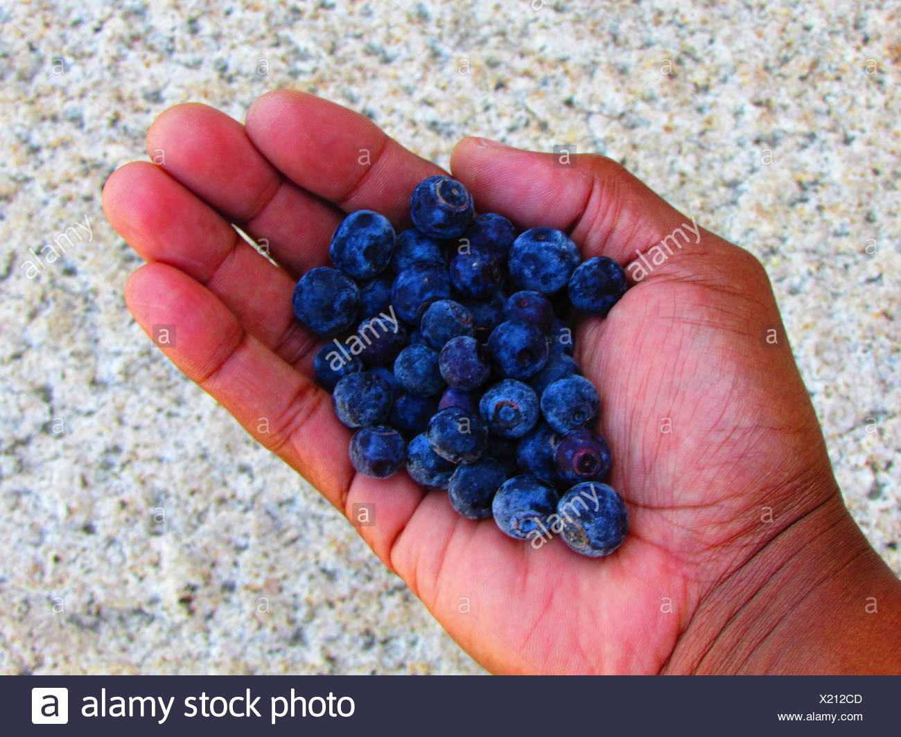 enjoying a handful of SuperFood, frozen blueberries! - Stock Image