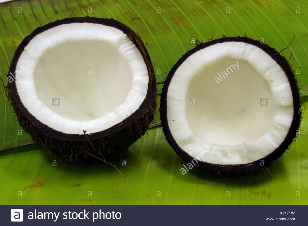 tropical fruit coconuts cut in half studio food Stock Photo