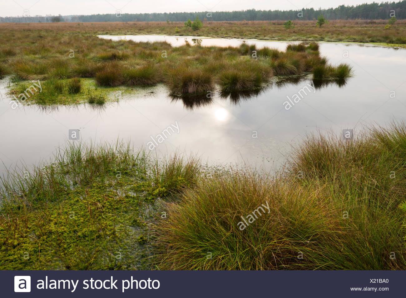 Moorlands, Schweimker Moor Nature Reserve, Lower Saxony, Germany - Stock Image