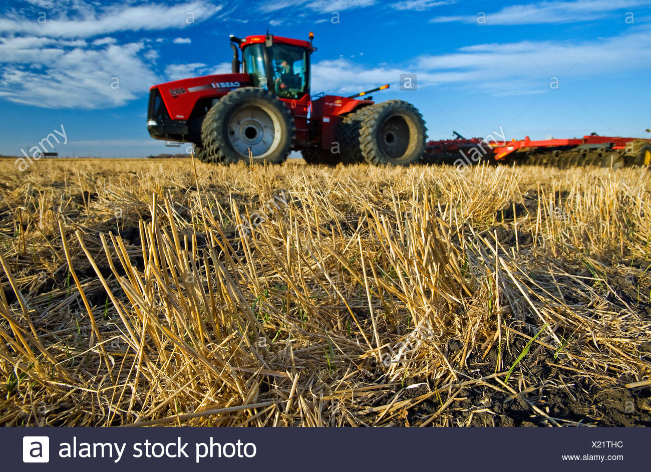 Close-up of wheat stubble with an out of focus tractor pulling cultivating equipment in the background / Manitoba, Canada. - Stock Image