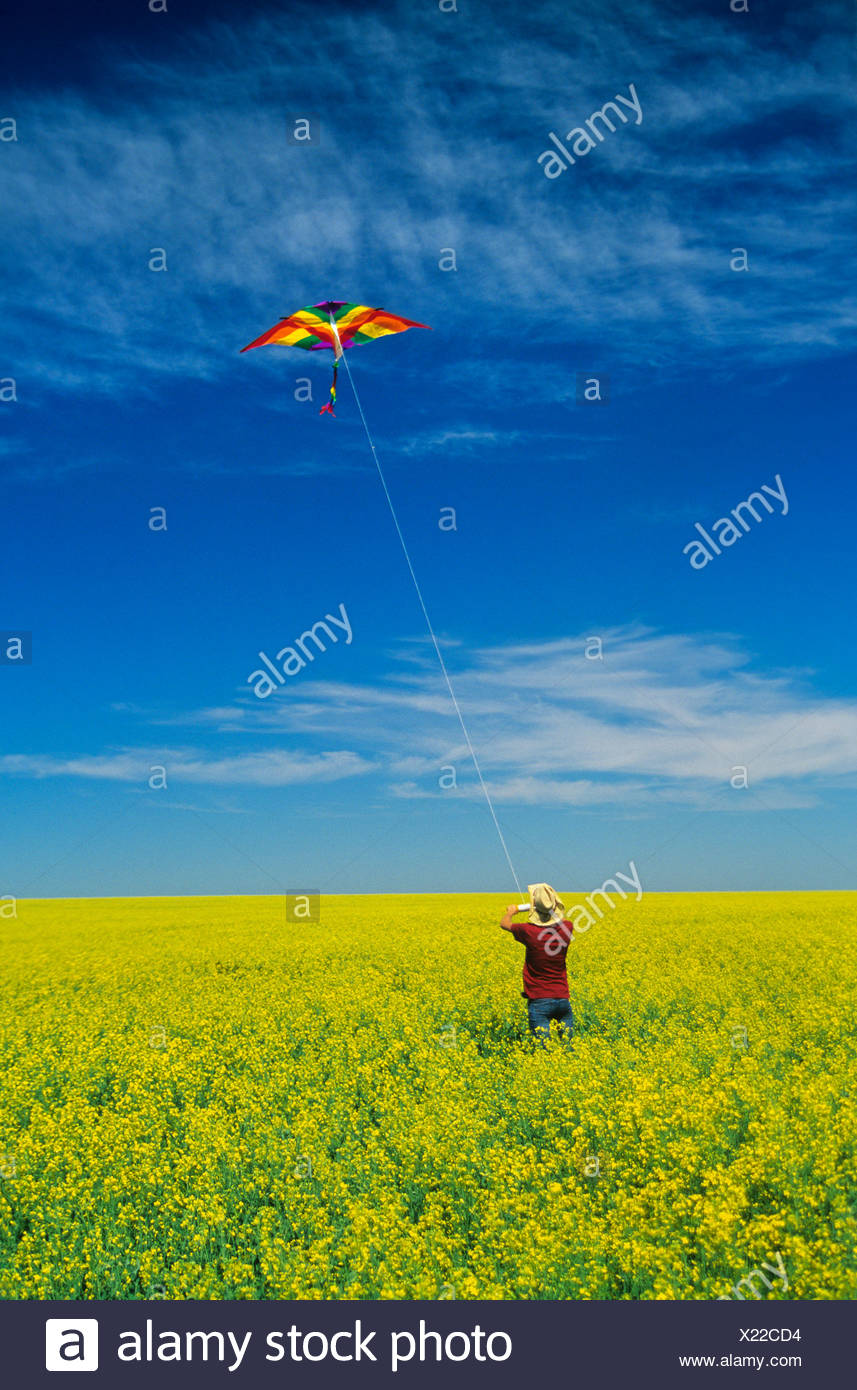 a teenage farm girl flies a kite in a bloom stage canola field, near Somerset, Manitoba, Canada - Stock Image