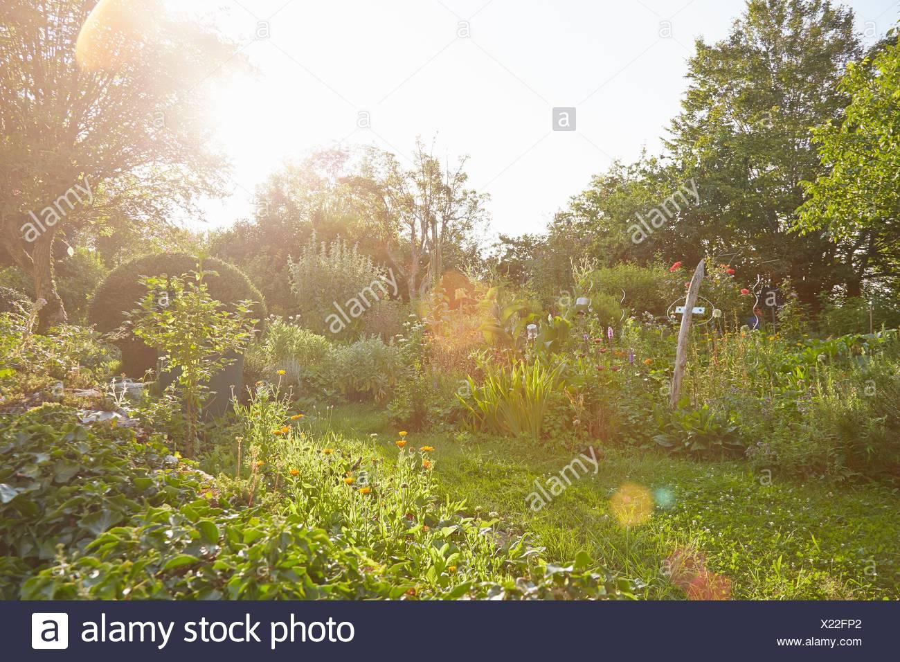 Herb garden in sunlight - Stock Image