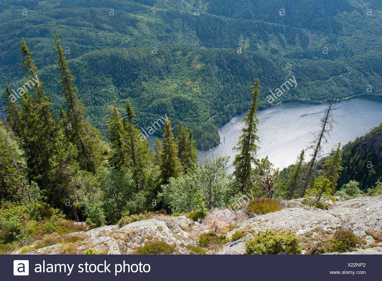 Aerial view onto conifers, Spruce trees (Picea abies), Lake Bandak, Lårdalstigen near Dalen, Lardalstigen, Telemark, Norway - Stock Image