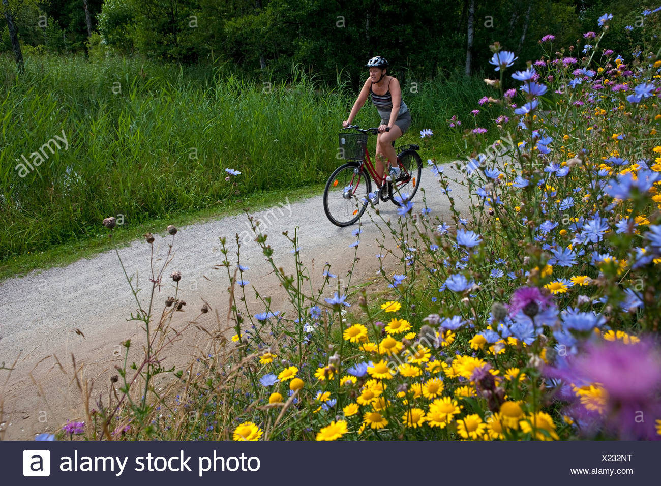 Female cyclist on the country road in summer landscape with flowers in foreground Stock Photo