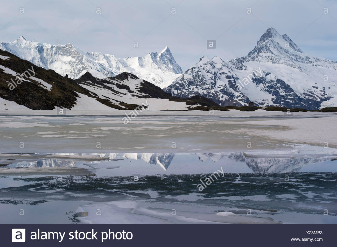 Ice-capped brook Alpsees, fright horn - Stock Image