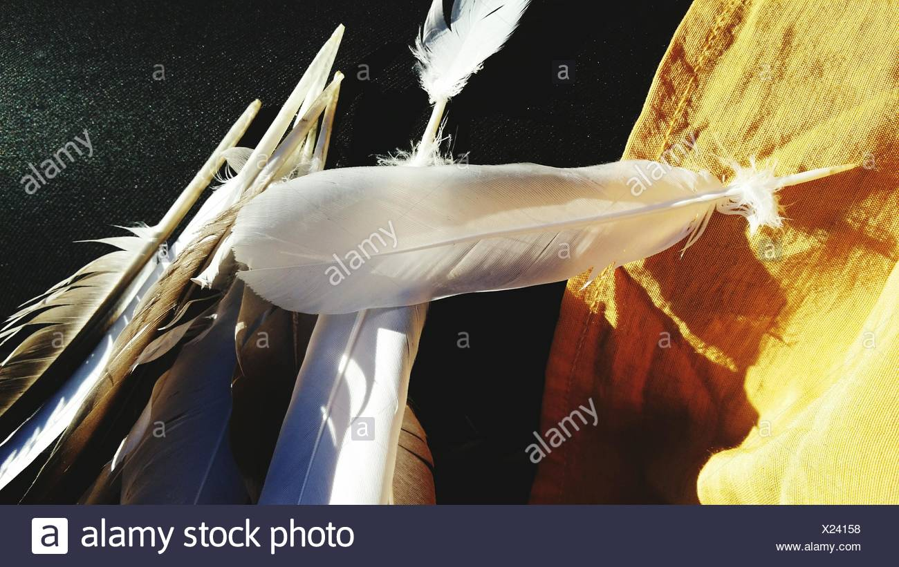 Close-Up Of Feathers - Stock Image