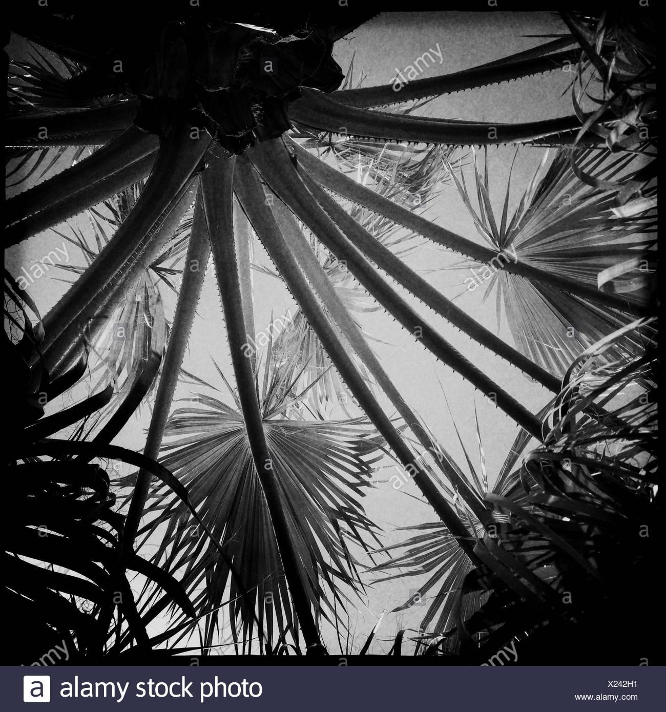 United arab emirates abu dhabi palm trees stock image