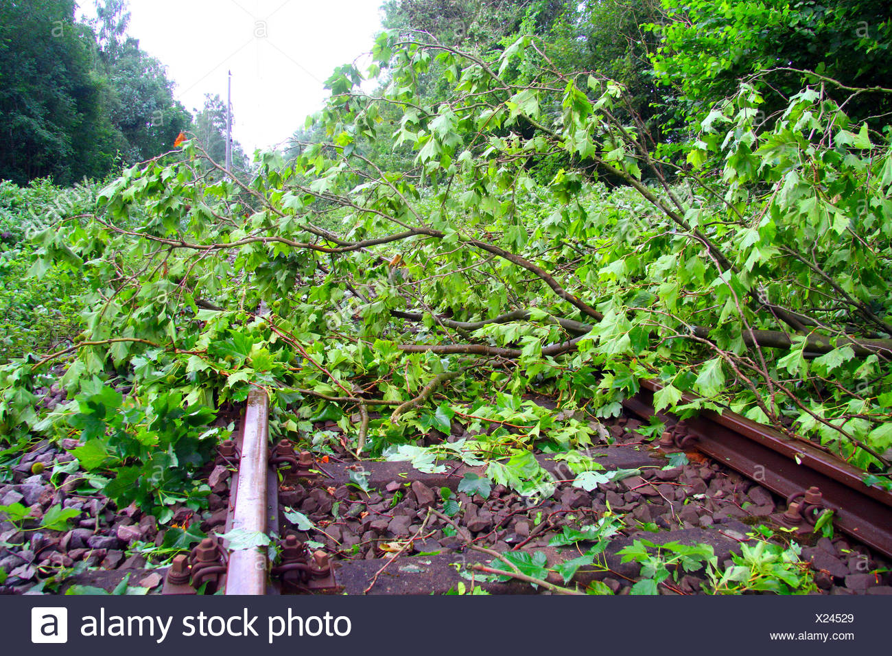 fallen trunk of a maple on a railtrack, storm front Ela at 2014-06-09, Germany, North Rhine-Westphalia, Ruhr Area, Essen - Stock Image