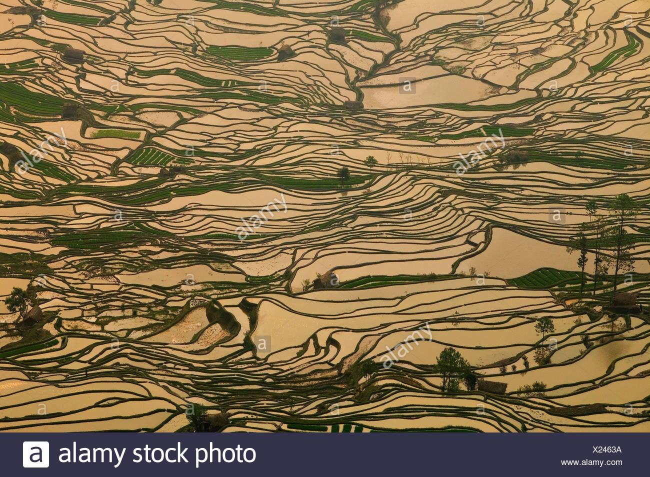Terraced rice paddies, Yunnan Province, China - Stock Image