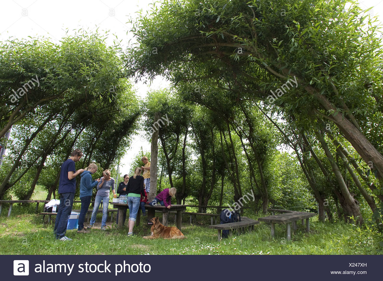resting place surrounded by growed willow cuttings, Germany - Stock Image