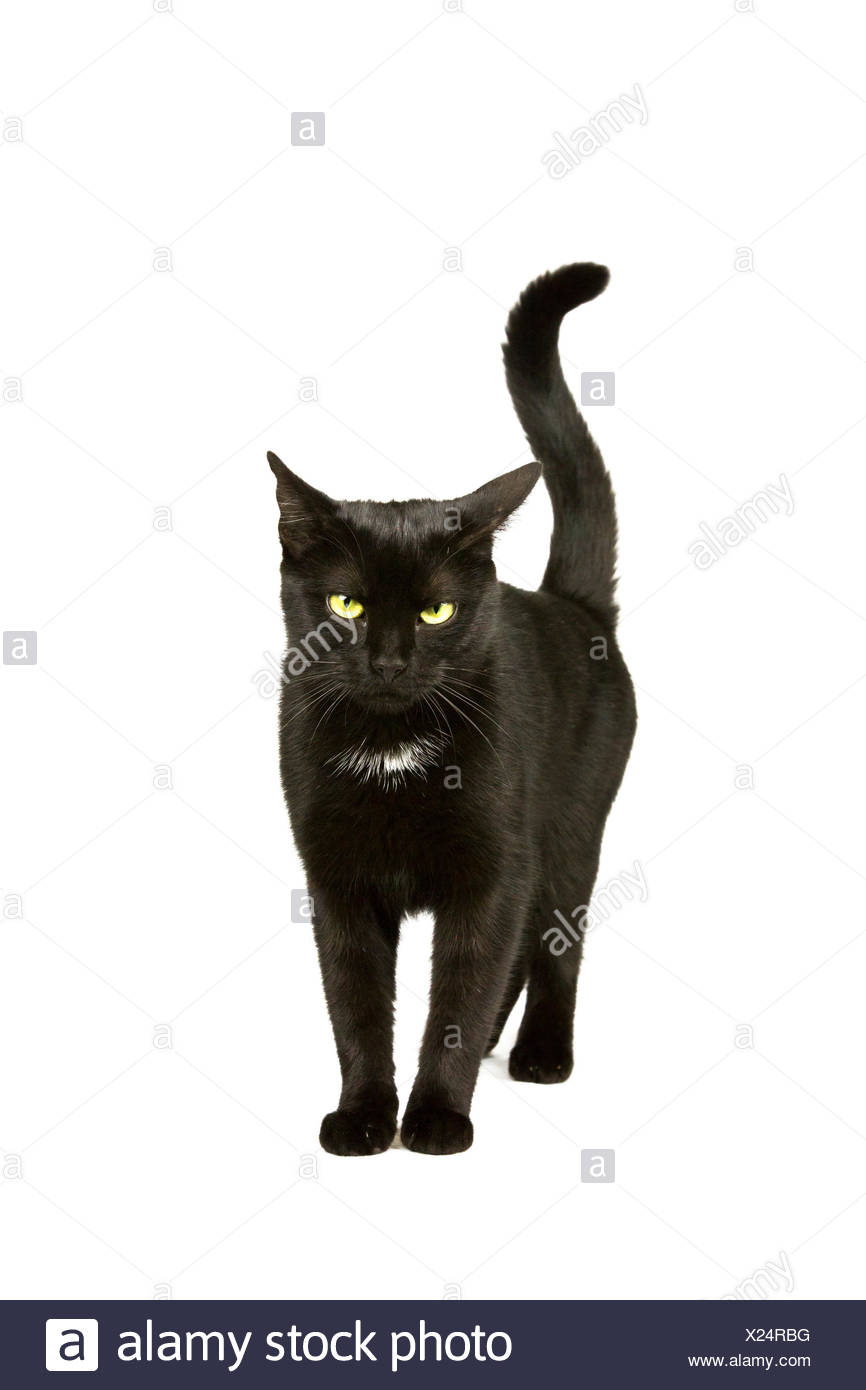 Black cat moves - Stock Image