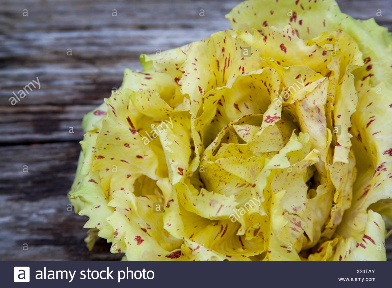 Castelfranco radicchio lettuce - Stock Image