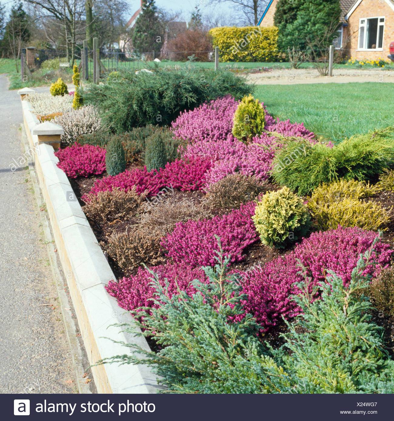 Conifer and Heather Garden   CHG025721 - Stock Image