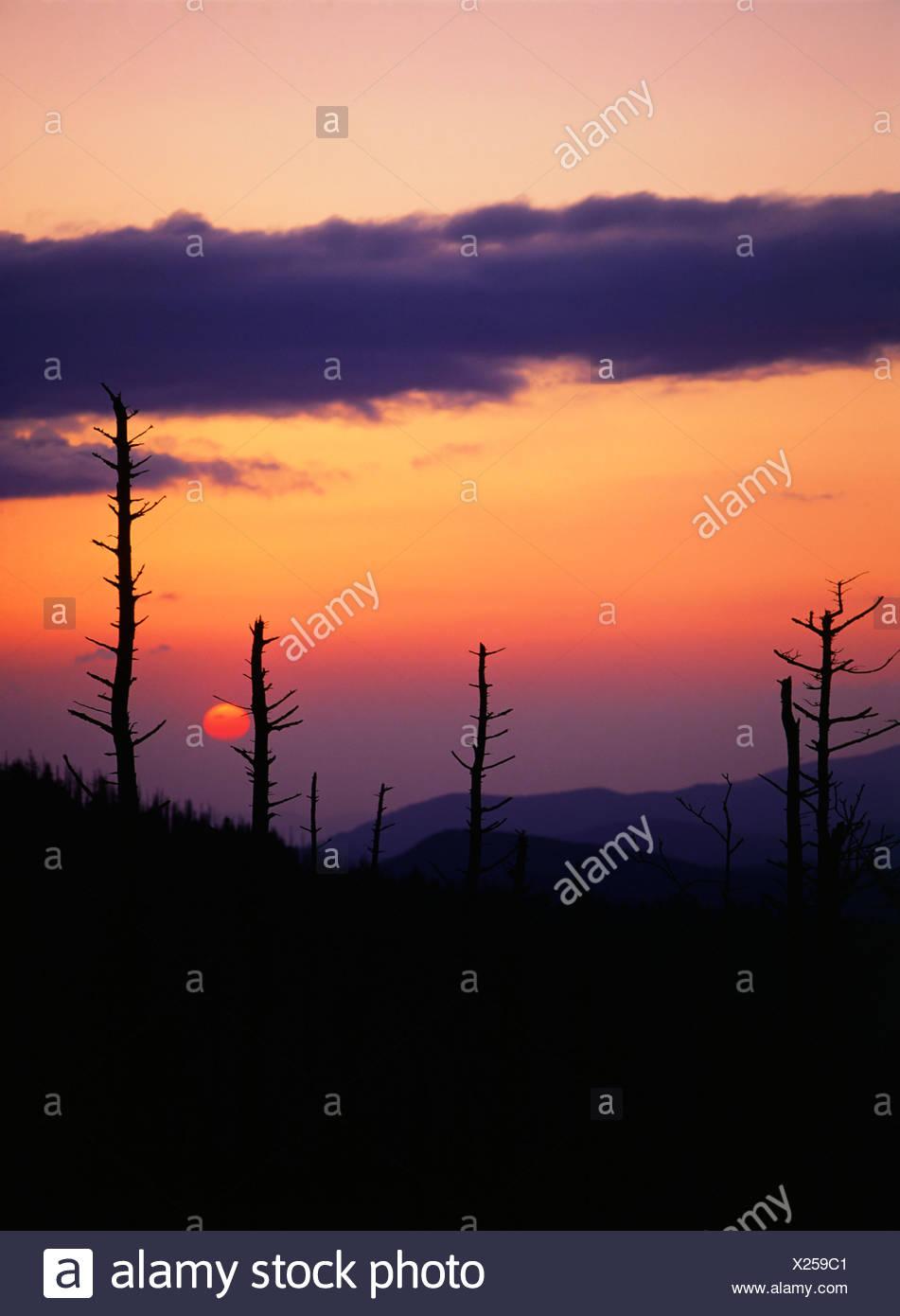 Pine forest killed by acid rain Stock Photo: 276712353 - Alamy