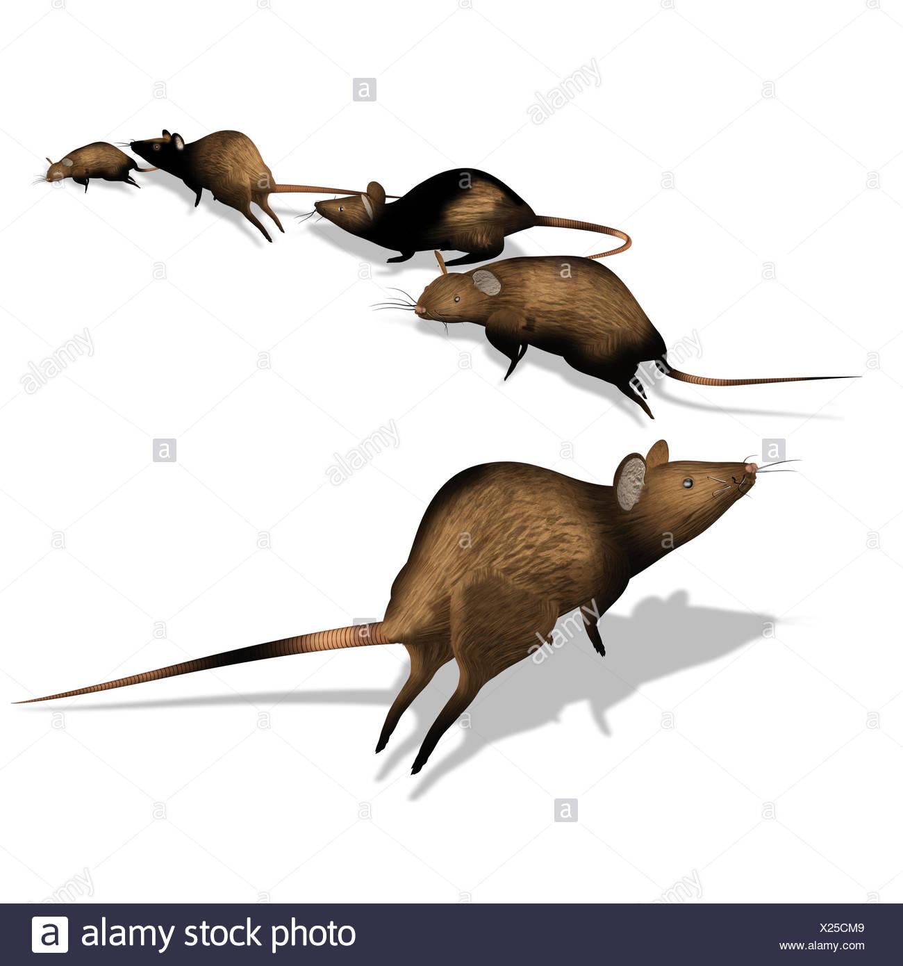 rats escape - Stock Image