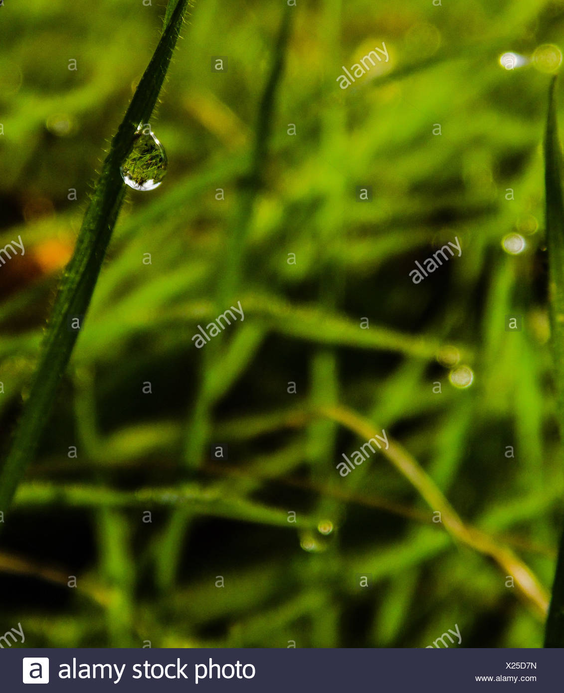Close-Up Of Water Drop On Blade Of Grass - Stock Image