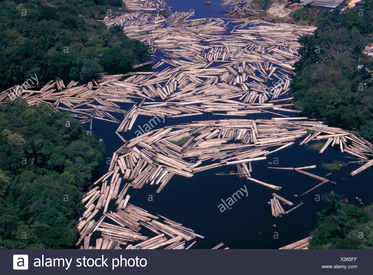 Amazon rainforest, Brazil. Transport of truncks in the rivers. - Stock Image