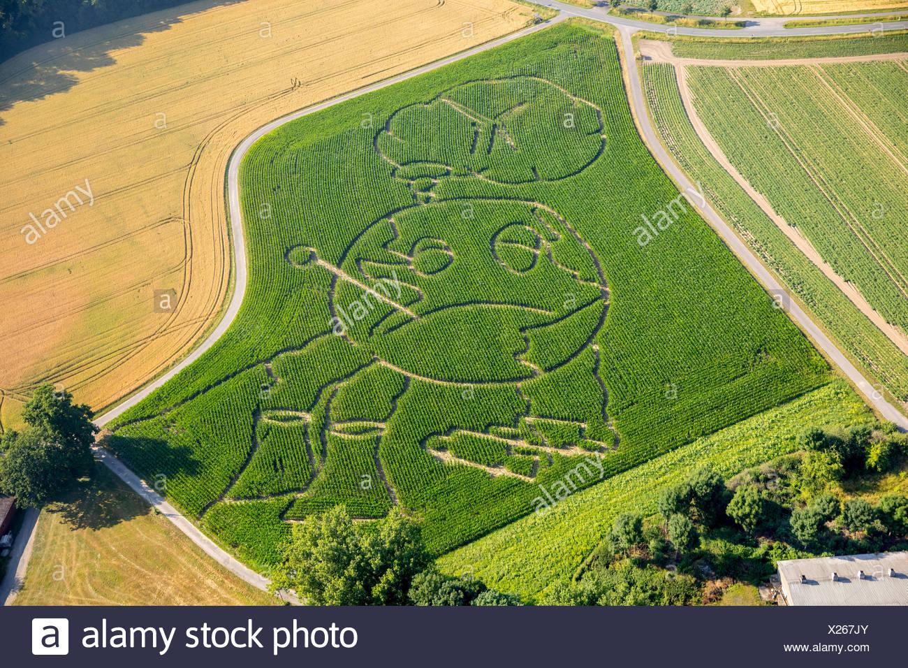 Corn maze, global warming, Selm, Ruhr area, North Rhine-Westphalia, Germany - Stock Image