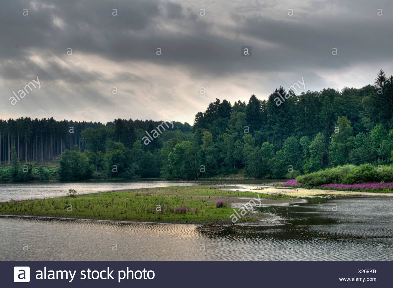 succession at a lake at midsummer low water, Germany, North Rhine-Westphalia, Moehnesee Stock Photo